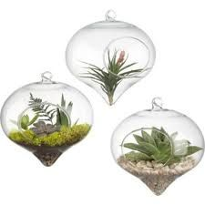 Small hanging terrariums