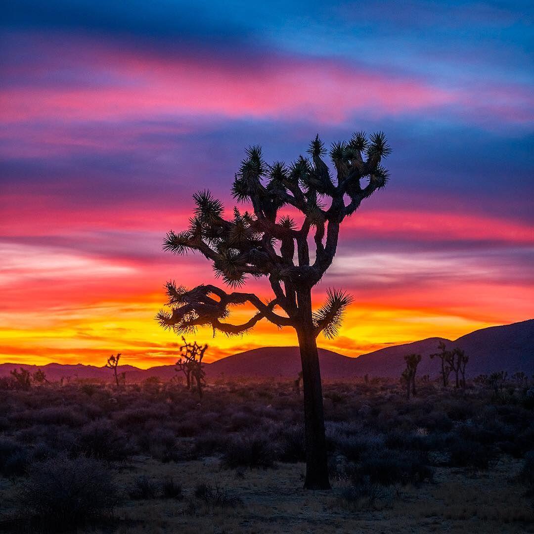 Pin On Styɴɴiɴɢ Sĸieѕ Hd wallpaper sunset desert trees bushes
