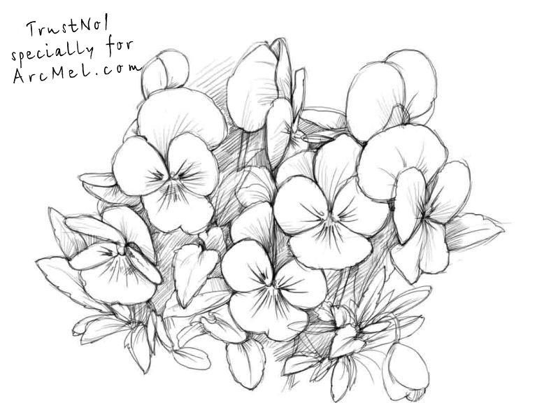 Pin By Patricia Newkirk Stack On Flowers Flower Line Drawings Drawings Flower Drawing