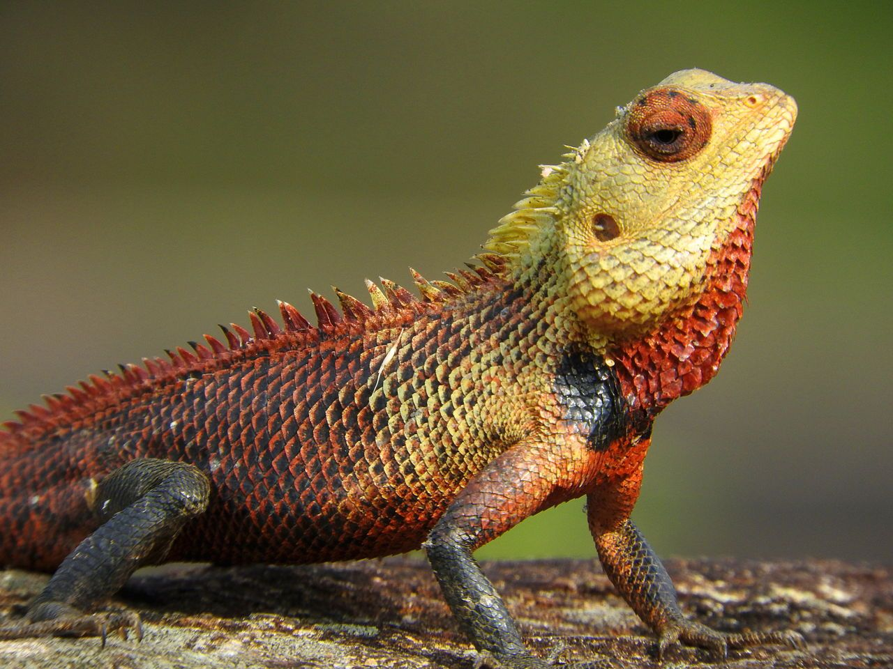The Habitat of Lizards is Nothing Like You'd Expect! Find
