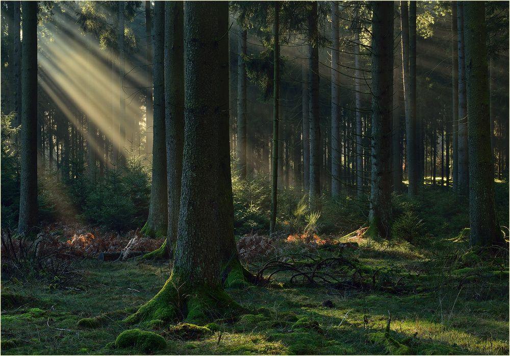 Ein weiteres Strahlenfoto, von einem wunderbaren Morgen im Wald!  Es handelt sich bei der Aufnahme um eine kamerainterne HDR-Aufnahme, die ansonsten nur sehr gering bearbeitet wurde.