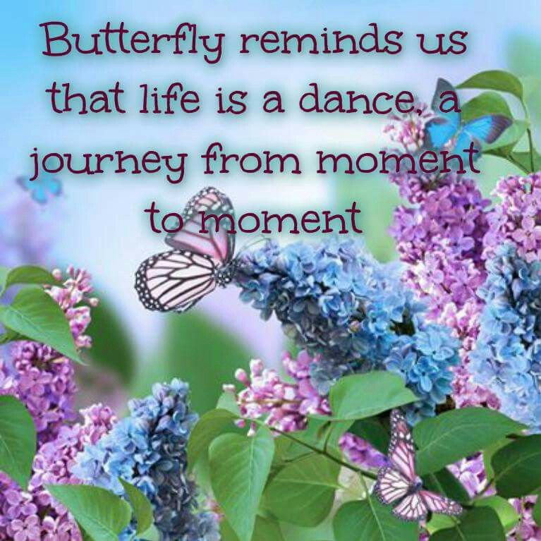 Image result for butterfly Sunday pictures