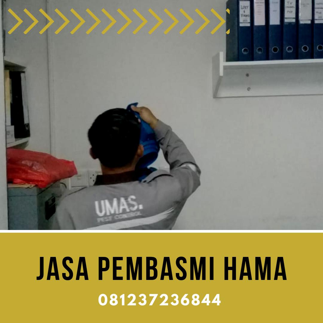 Pest Control · Bali · WA 081237236844 Jasa Anti Rayap Terbaik di Bali. Jasa  lainnya  Jasa Fogging Nyamuk Murah 9fe802e11f