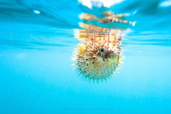 Fish Art Puffer Fish Underwater Photography Ocean Art Yoga Art Costa Rica Pura Vida Summer Floating Charms A Underwater Art Surf Art Ocean Photography