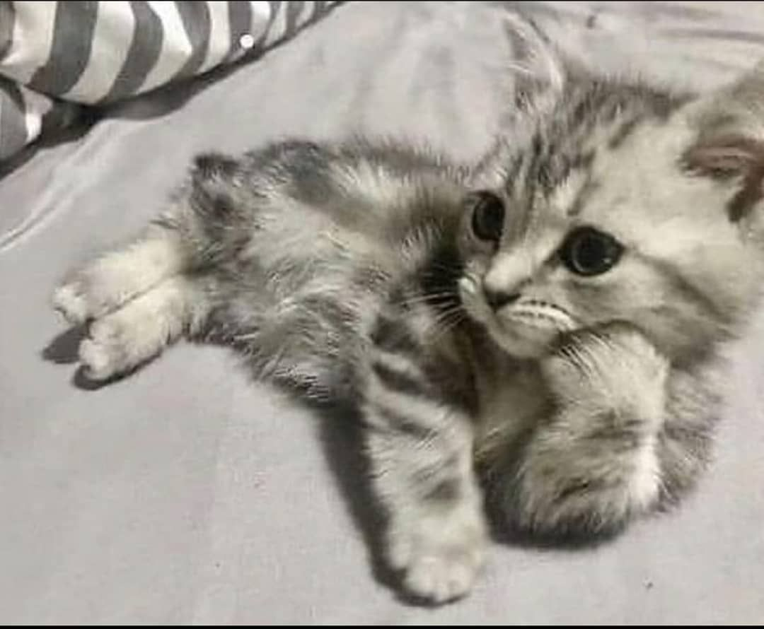 Pin On Cute Cats