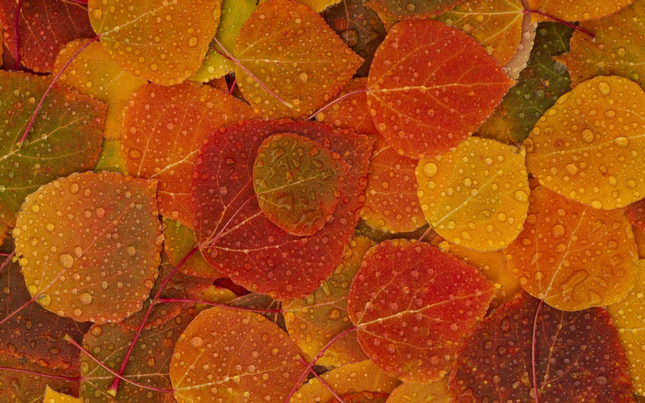 fall leaves on the autumn wallpaper background 6787 wallpaper