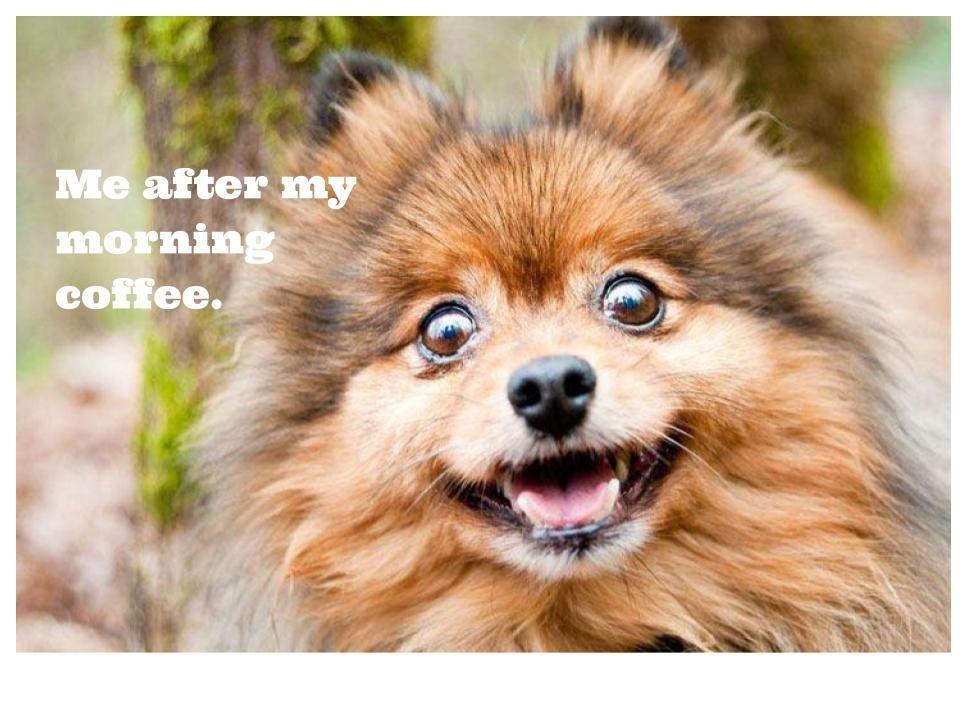 Pin By Carina On Cute Animal Memes Pinterest Pomeranian Dogs