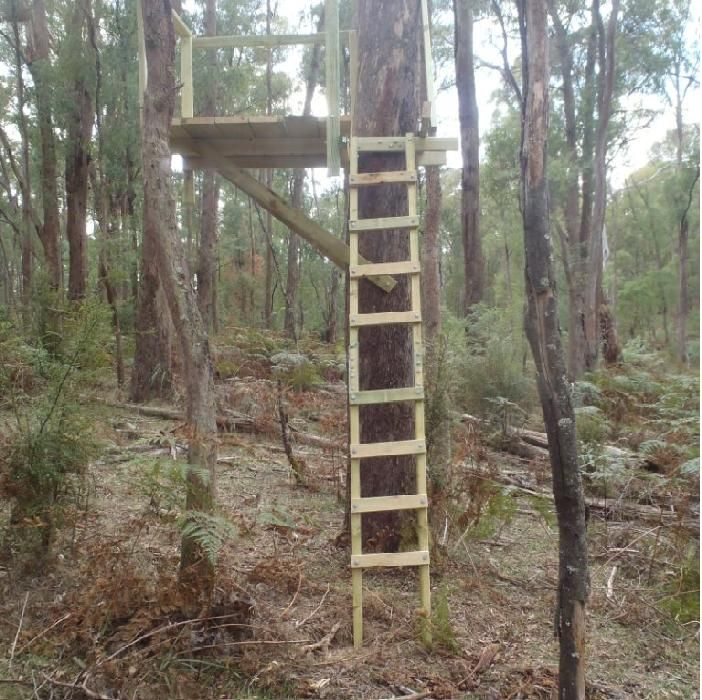 Tree stand deer stands pinterest deer hunting for How to build a deer blind