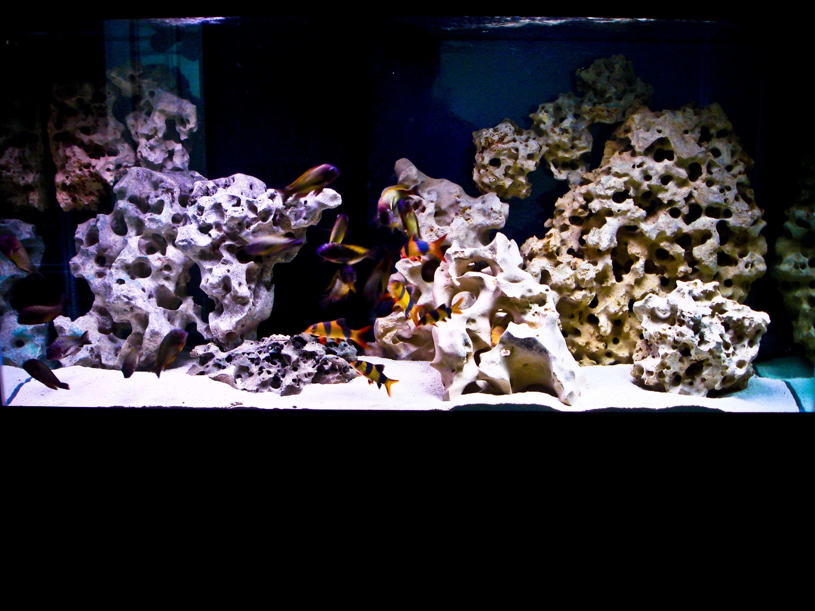 lake Tanganyika tank setup | Aquascapez | Aquarium fish