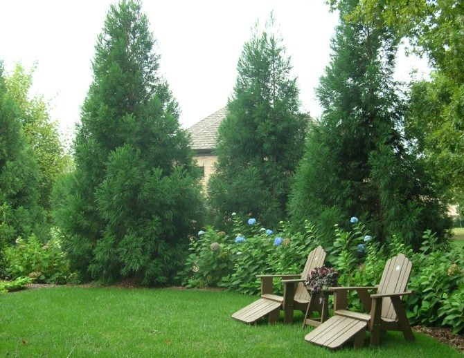 privacy landscape plantings
