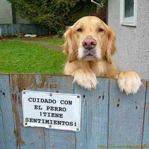 Pin De Carolina Romero En Frases Lindas Frases Bonitas Cuidado Con El Perro Perros Animales Bonitos