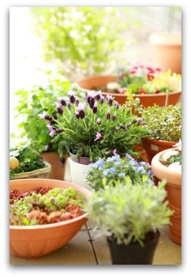 Best Tips For Growing Herb Container Gardens Indoors Or Outdoors. Designing  And Planting An Herb