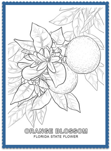 Florida State Flower Coloring Page
