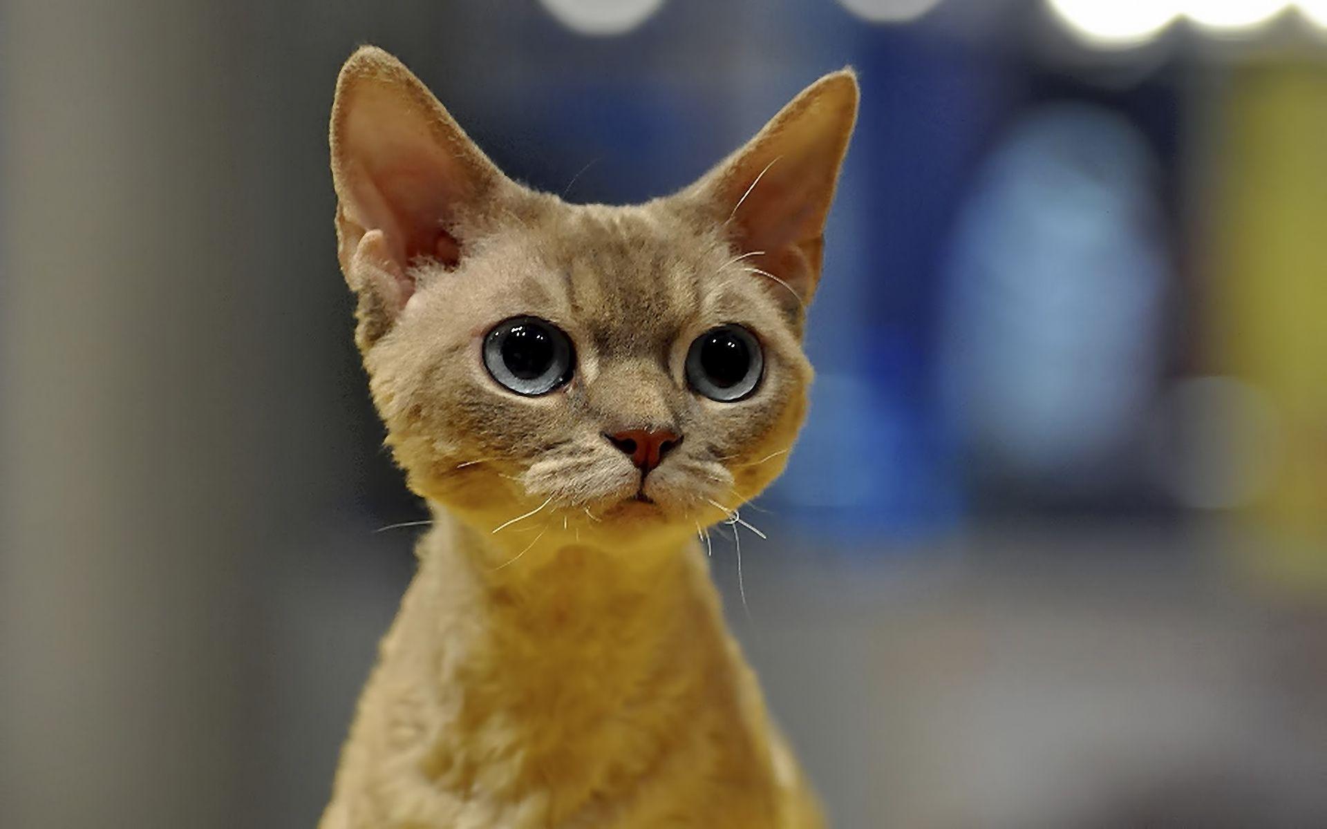 Cute big cat eyes | Anatomy Reference - Animal | Pinterest | Cat ...