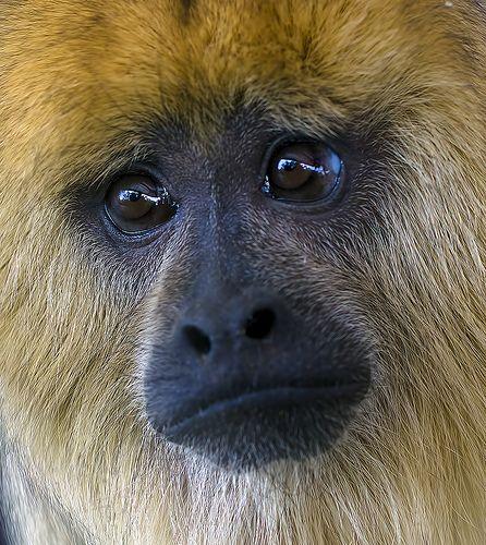 Sad face :( | Animals | Monkey, Animals beautiful, New ... Sad Animal Face