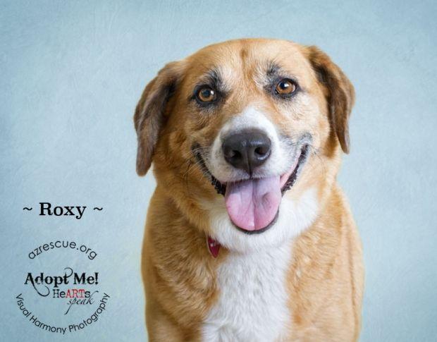 Roxy Azrescue Org Phoenix Az Rescue Dogs Dog Adoption Dogs