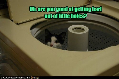 Uh Are You Good At Getting Barf Out Of Little Holes Funny Cats Bad Cats Funny Cat Pictures