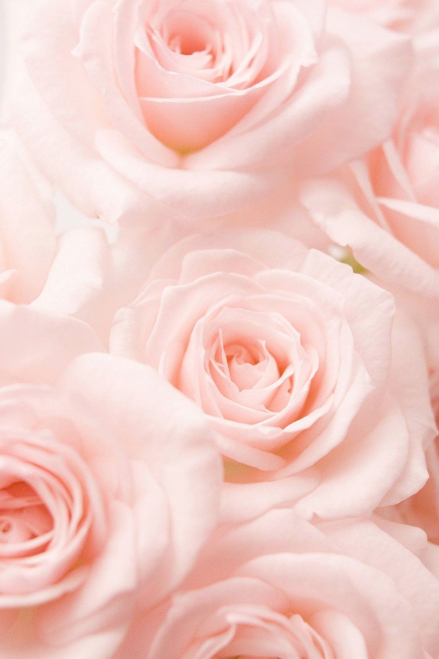 Pin By Amanda Leal On Mummy In 2020 Pink Roses Background Rose Color Meanings Flower Aesthetic