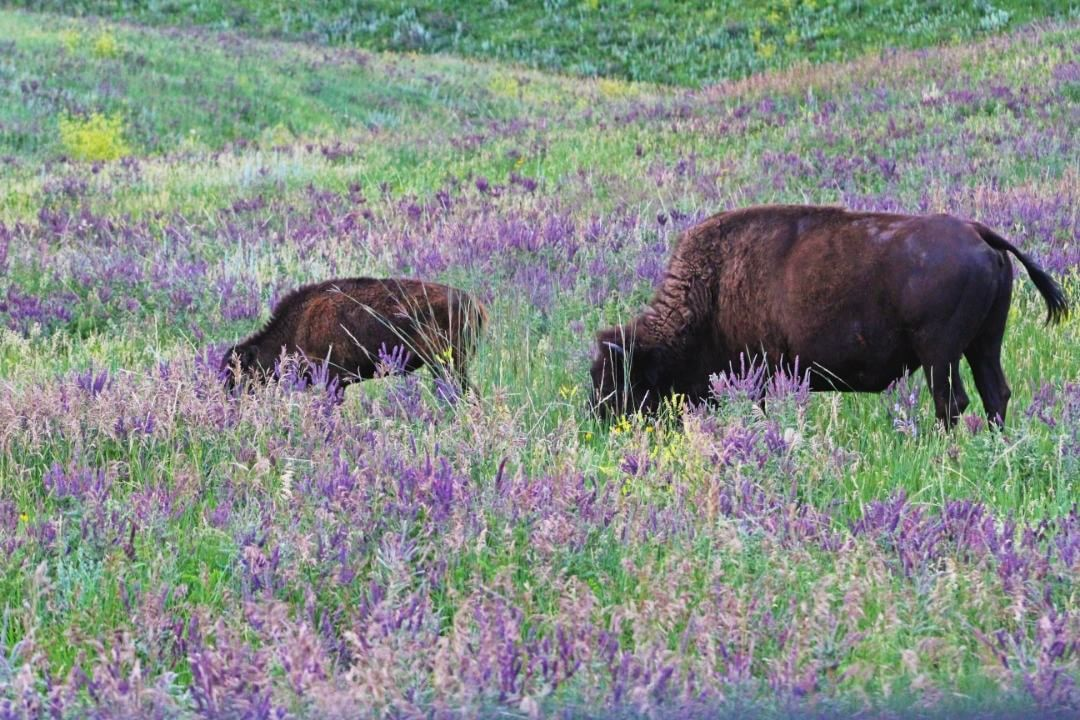 They can't get enough of those wildflowers. HiFromSD
