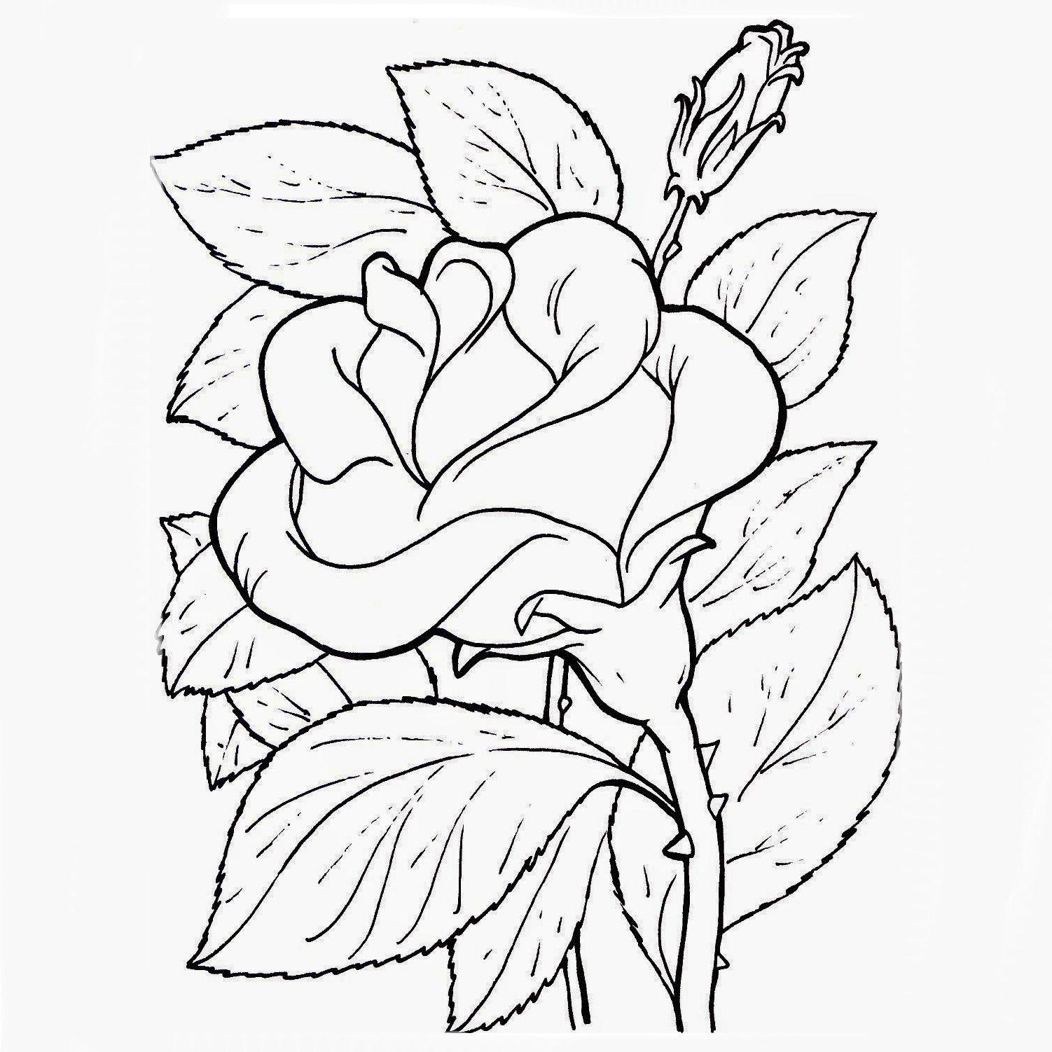 Plantillas De Flores Para Imprimir Y Pintar Páginas Para