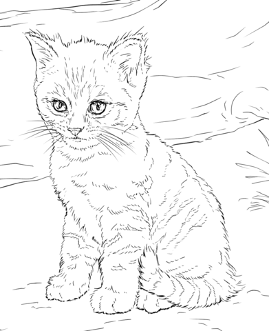 cute kitten coloring page from cats category select from 24873 printable crafts of cartoons. Black Bedroom Furniture Sets. Home Design Ideas