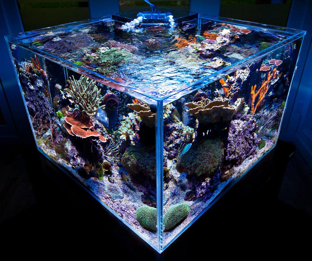 ... aquarium marin aquariums marins aquariums aquariums à la maison