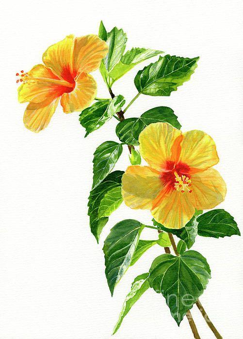 Epingle Par Minh Chau Sur Flower Aquarelle Fleurs Fleurs Et