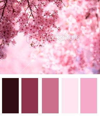 Cherry Blossom Color Scheme Google Search Combinacoes De Cores Esquema De Cores Equilibrio De Cores
