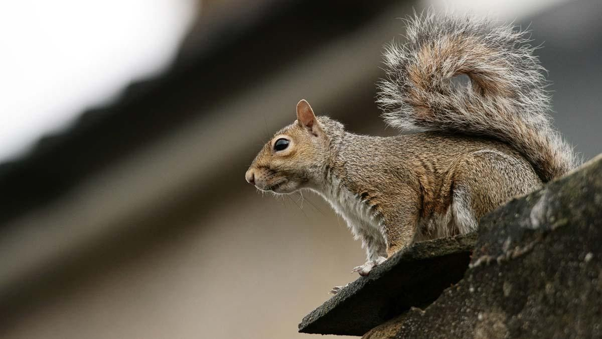 Are Squirrels A Serious Threat To A Solar System With Images Solar System Threat Solar