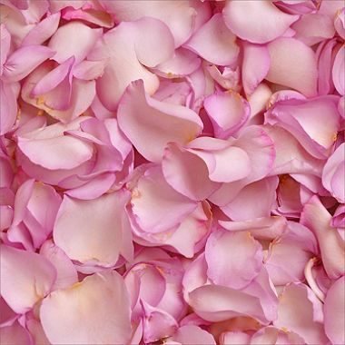 500 Fresh Lavender Rose Petals One Gallon Bag Bulk Roses Red Rose Petals Rose Petals