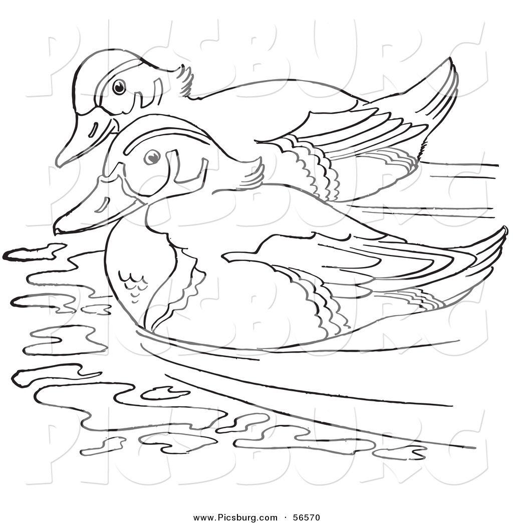 Wood Duck And Deer Drawing