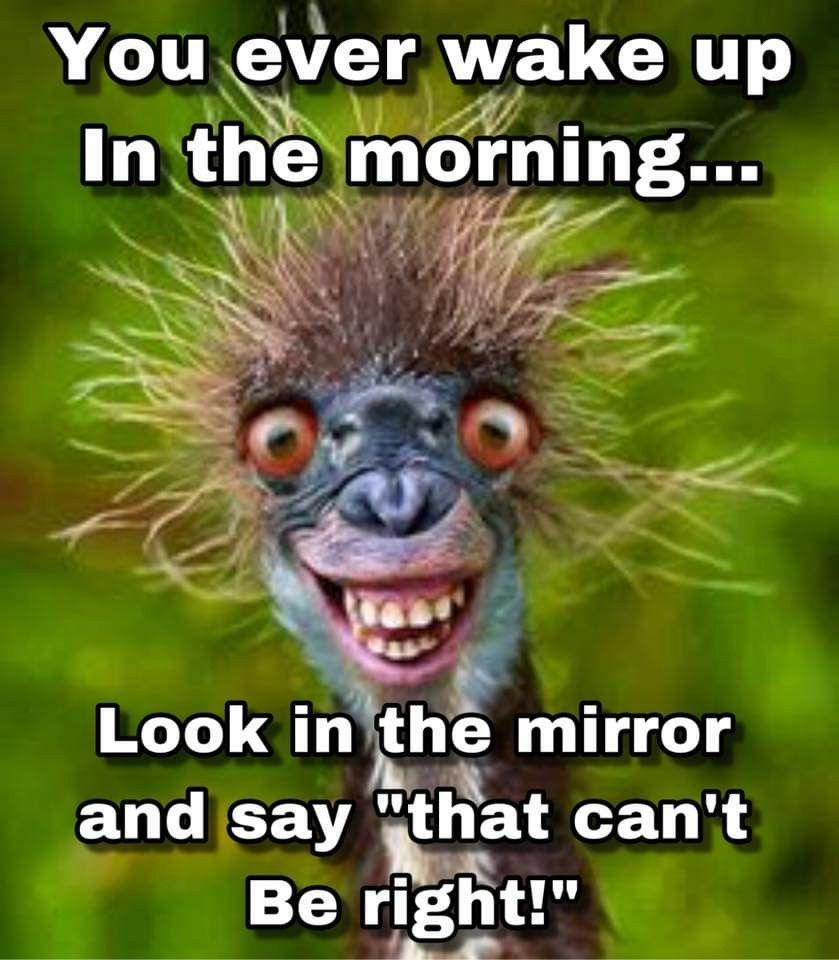 Pin By G Davis On Funnny Morning Quotes Funny Funny Good Morning Quotes Funny Animal Faces