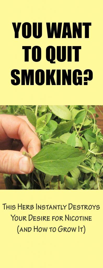 Want To Quit Smoking This Herb Instantly Destroys Your