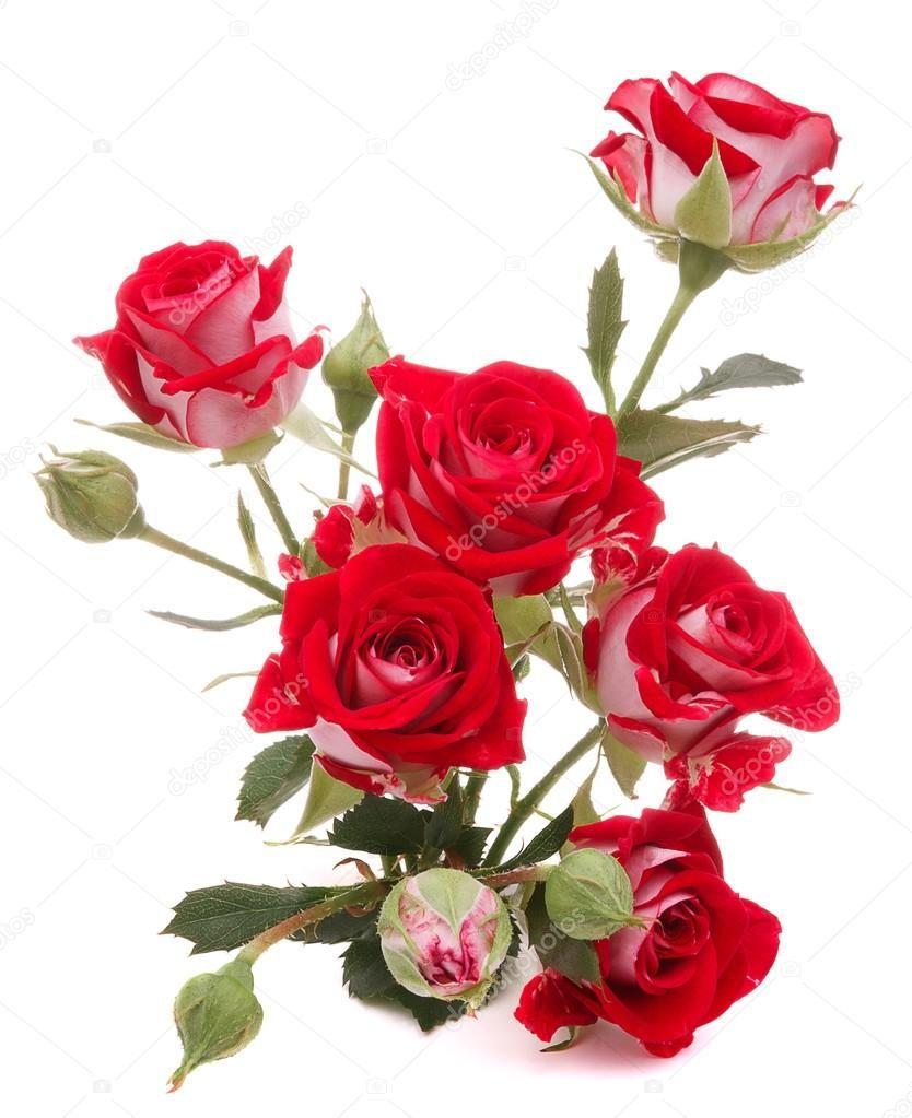 Baixar Buque De Flor Rosa Vermelha Isolado No Recorte De Fundo