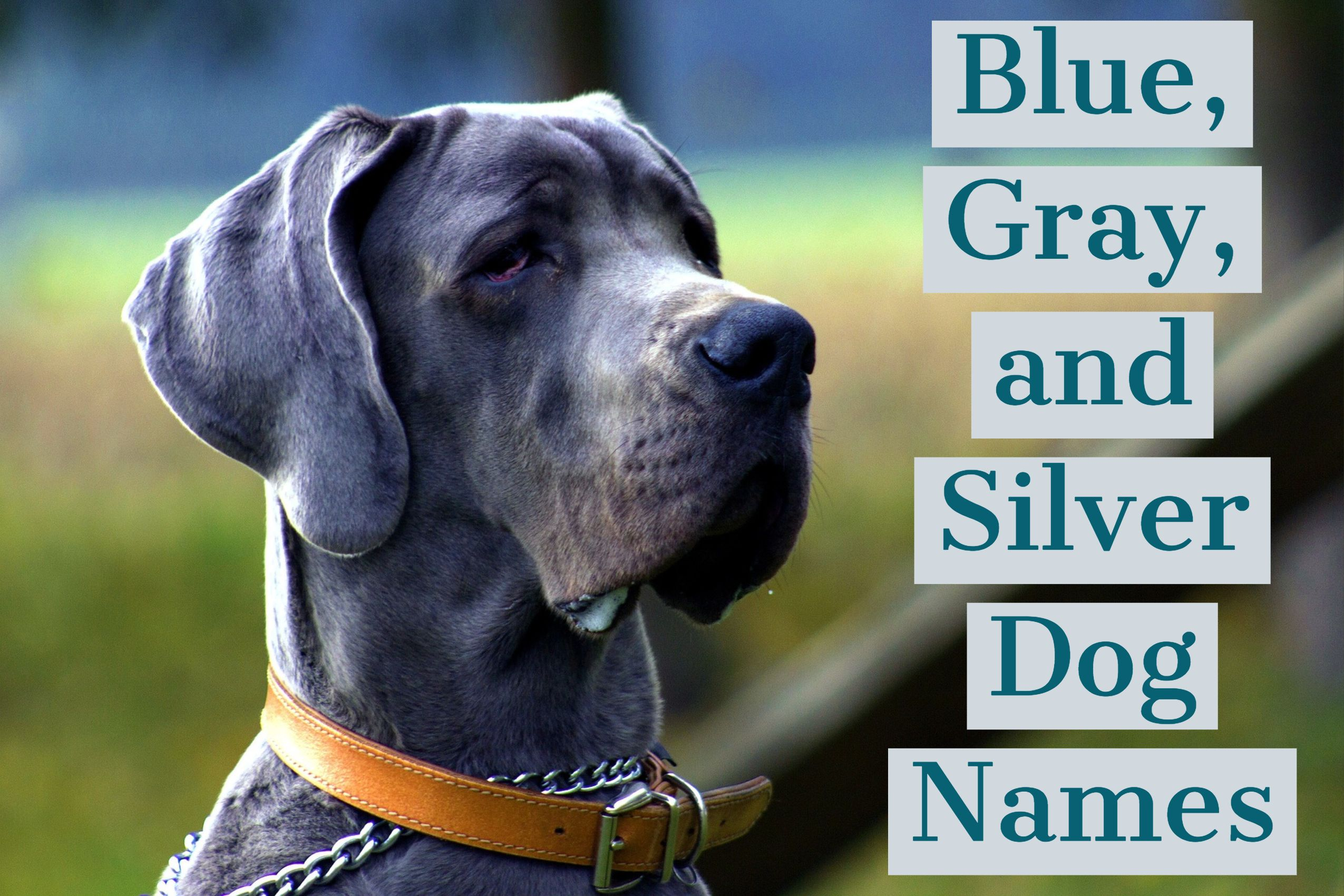 150 Unique Names For Blue Gray And Silver Dogs Blue Eyed Dog