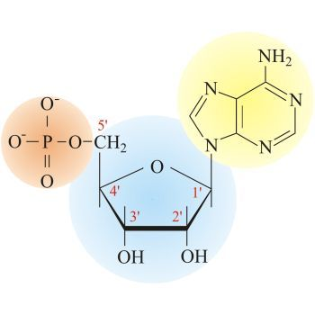 Nucleotide Chemistry Dictionary Glossary Macromolecules Chemistry Biochemistry
