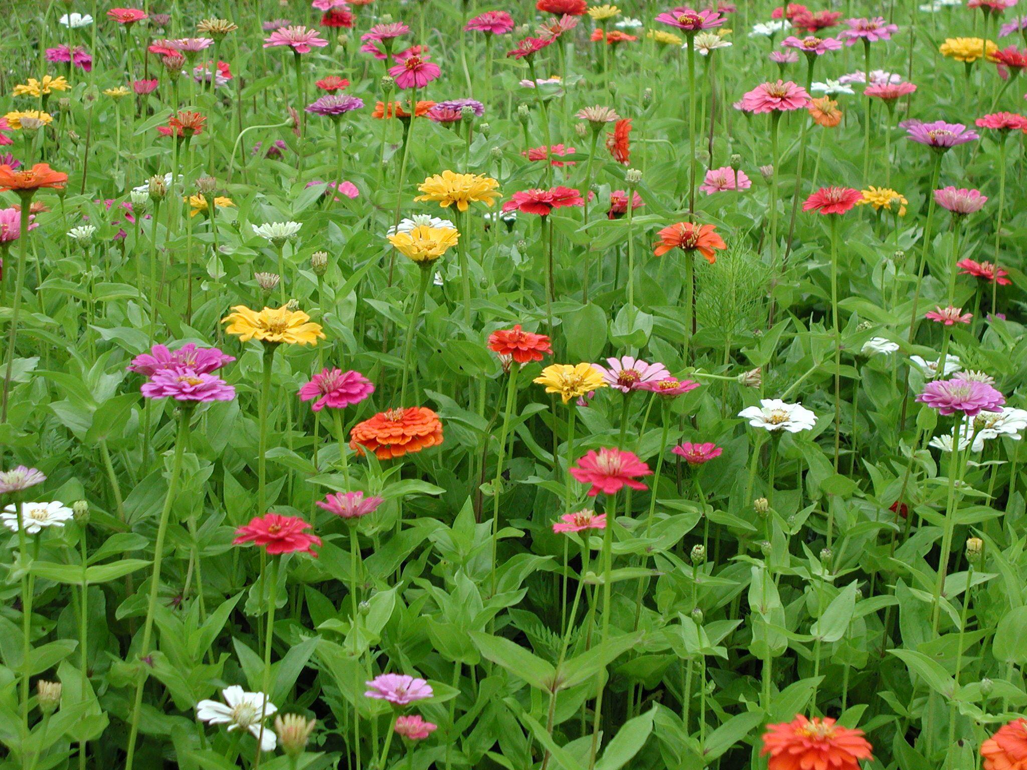 Image from http://hillcrest97.com/wildflower%20field%202.JPG.