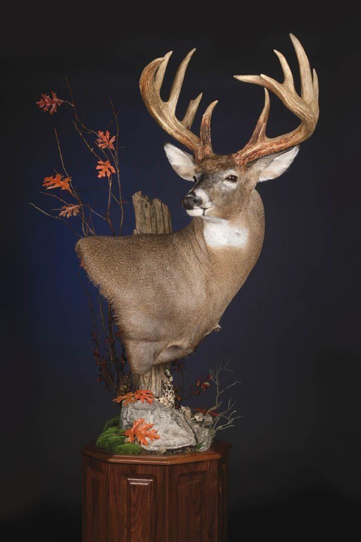 Mckenzie Supply On Taxidermy Taxidermy Display Deer