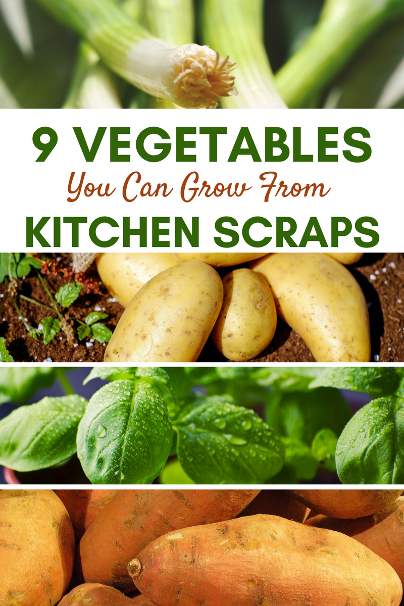 9 Vegetables You Can Grow From Kitchen Scraps Growing Vegetables