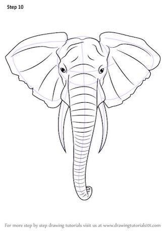 Elephant Head Dibujos De Elefantes Dibujo De Cabeza De