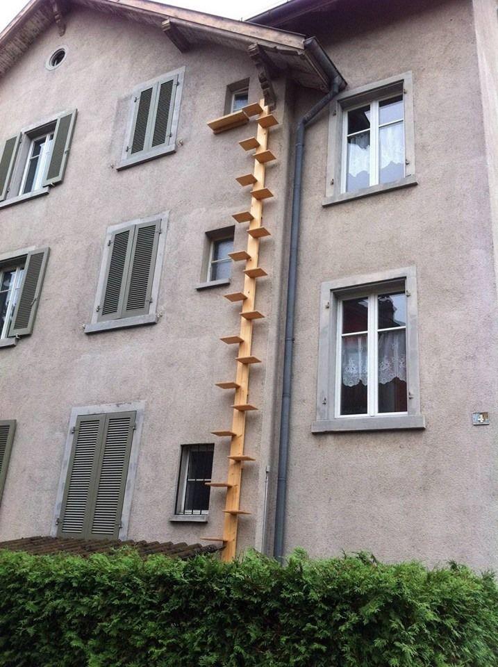 cat ladder cat ladder pinterest katzen katzenleiter und kratzbaum katze. Black Bedroom Furniture Sets. Home Design Ideas
