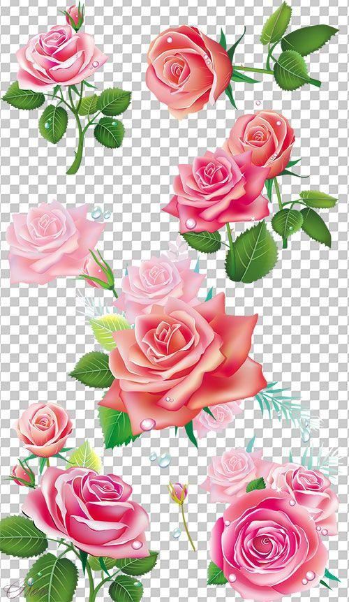 клипарт розы на прозрачном фоне - Поиск в Google
