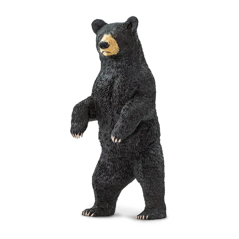 Close Up Of A Young Black Bear Black Bear American Black Bear Bear