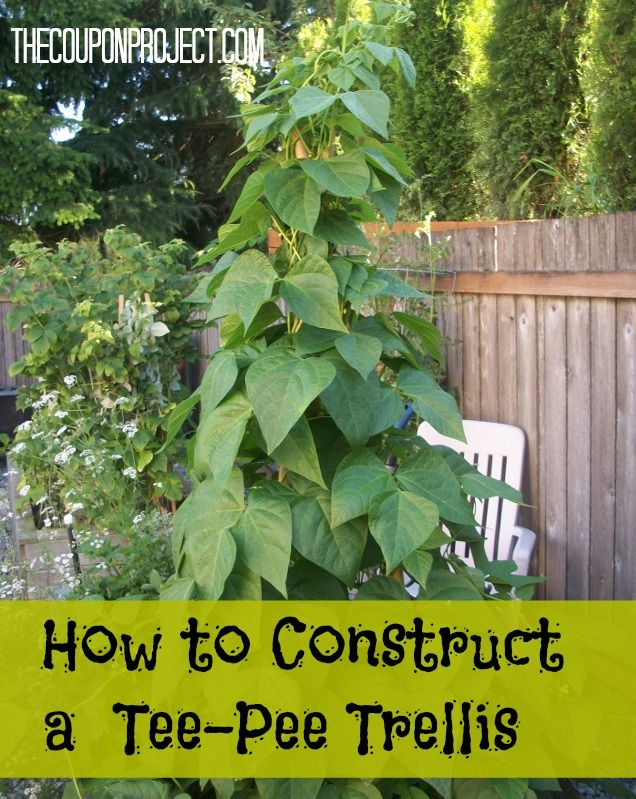 how to build a cucumber trellis