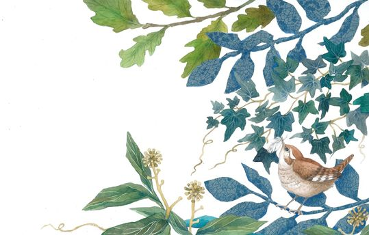 Wren in the leaves.  An illustration for a childrens' book of poetry to be published by Eerdmans in 2014. By Helen Cann.