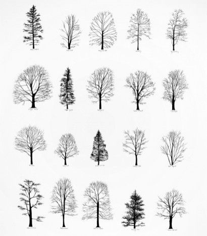 Architecture Drawing Trees graphic design studio & apparel boutiquebathousedesign