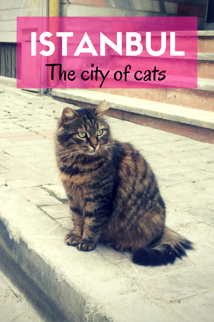 All you need to know about the stray cats of Istanbul