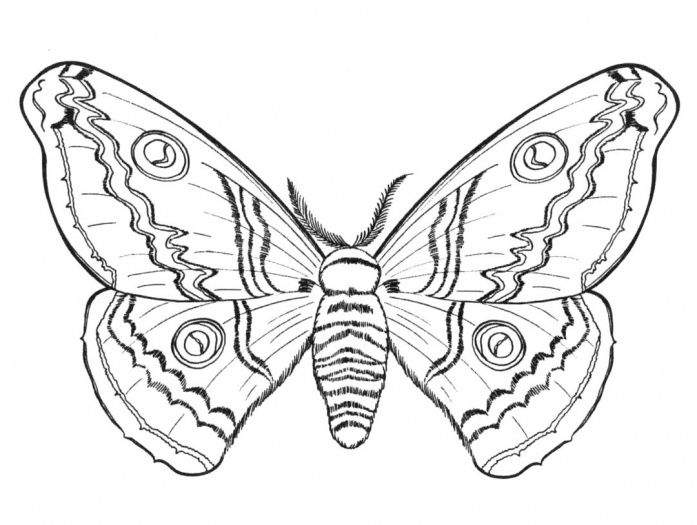 butterfly-5-coloring-page.jpg (697×525)