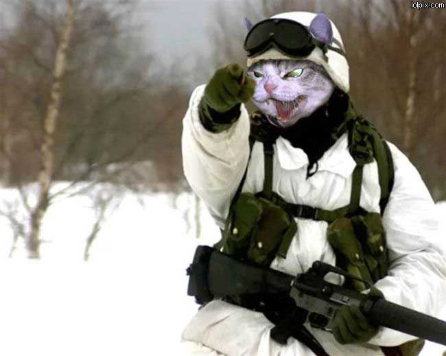 Image result for cat military