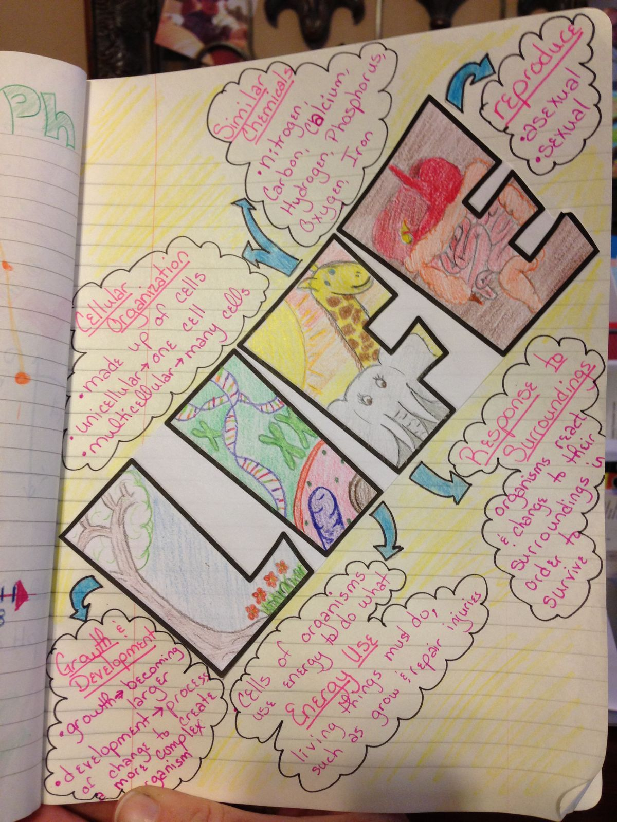 intro to characteristics of living things   interactive science notebook page